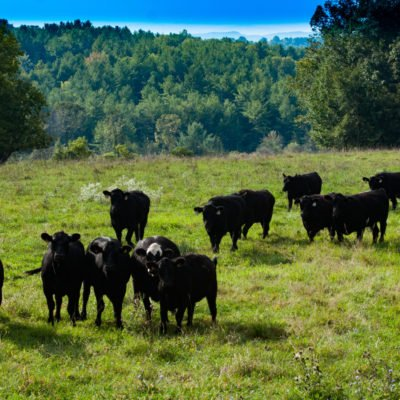 Buy Natural Beef Online